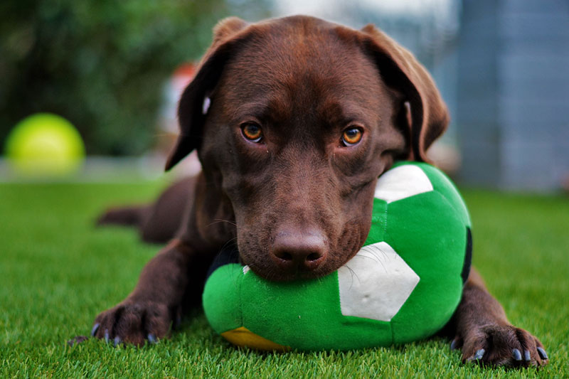 Tips for choosing a doggy daycare